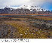 Купить «Aerial view of herd of Svalbard reindeer (Rangifer tarandus platyrhynchus) in the Adventdalen valley, Spitsbergen, Svalbard, Norway.», фото № 33470165, снято 2 апреля 2020 г. (c) Nature Picture Library / Фотобанк Лори