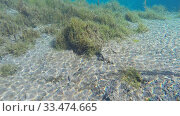 Купить «Озеро с голубой водой, рыбы. Подводная съемка», видеоролик № 33474665, снято 29 сентября 2014 г. (c) Mikhail Erguine / Фотобанк Лори