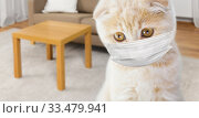 close up of scottish fold kitten in medical mask. Стоковое фото, фотограф Syda Productions / Фотобанк Лори