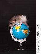 Купить «Rat on a globe», фото № 33485589, снято 10 апреля 2013 г. (c) Argument / Фотобанк Лори