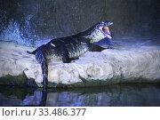 Водяной варан (Varanus salvator ) зевающий в зоопарке. Стоковое фото, фотограф Татьяна Белова / Фотобанк Лори