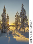 Winter landscape in afternoon light with nice color in the sky, snow on the trees, Gällivare county, Swedish Lapland, Sweden. Стоковое фото, фотограф Mats Lindberg / age Fotostock / Фотобанк Лори