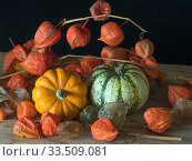 Home-grown pumpkins and Chinese lantern (Physalis alkekengi). Стоковое фото, фотограф Ernie  Janes / Nature Picture Library / Фотобанк Лори