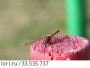 Стрекоза (лат. Odonata) Стоковое фото, фотограф Валерий Акулич / Фотобанк Лори