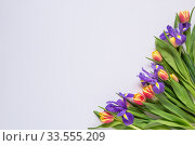 Bouquet of red tulips and irises on a white background. Стоковое фото, фотограф Дмитрий Тищенко / Фотобанк Лори