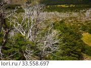 Forest and bushes near foot of Andes (2017 год). Стоковое фото, фотограф Яков Филимонов / Фотобанк Лори
