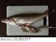 Predatory freshwater perch on a cutting board, fish sticking out of its belly. Стоковое фото, фотограф Ирина Мойсеева / Фотобанк Лори