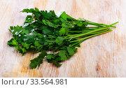 Green parsley on wooden table closeup. Стоковое фото, фотограф Яков Филимонов / Фотобанк Лори
