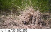 Купить «Invisible camouflaged army military man in camouflage among the grass sniper with an automatic rifle in hands», видеоролик № 33582253, снято 3 мая 2019 г. (c) katalinks / Фотобанк Лори