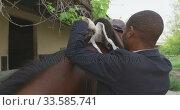 Купить «African American man installing the Dressage horse saddle», видеоролик № 33585741, снято 27 сентября 2019 г. (c) Wavebreak Media / Фотобанк Лори