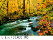 Купить «Oirase Mountain Stream flow rapidly passing green mossy rocks covered with falling leaves in the colorful foliage of autumn season forest at Oirase Gorge...», фото № 33633105, снято 13 июля 2020 г. (c) easy Fotostock / Фотобанк Лори