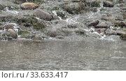 Stones on a river under heavy snow in winter season. Altai, Blue Lakes, Siberia, Russia. Стоковое видео, видеограф Serg Zastavkin / Фотобанк Лори