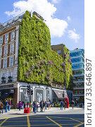 Купить «Bressenden Place Ivy Wall London England United Kingdom Capital River Thames UK Europe EU.», фото № 33646897, снято 10 мая 2019 г. (c) age Fotostock / Фотобанк Лори
