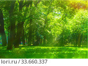 Купить «Summer sunny park landscape. Summer city park with deciduous green trees», фото № 33660337, снято 6 июня 2019 г. (c) Зезелина Марина / Фотобанк Лори