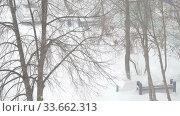 Купить «Blizzard in an urban environment. Abstract blurry winter weather background», видеоролик № 33662313, снято 29 апреля 2020 г. (c) Алексей Кокорин / Фотобанк Лори