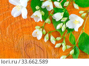 Jasmin on wooden background. Стоковое фото, фотограф Zoonar.com/Yana Gayvoronskaya / age Fotostock / Фотобанк Лори