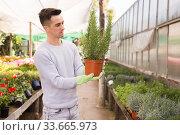 Owner of glasshouse controlling growing of rosemary. Стоковое фото, фотограф Яков Филимонов / Фотобанк Лори