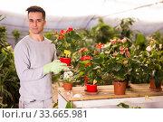 Купить «Young gardener caring for flowers in orangery», фото № 33665981, снято 8 ноября 2019 г. (c) Яков Филимонов / Фотобанк Лори