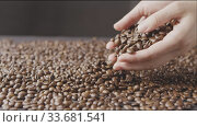 Woman's hands pour of roasted coffee beans on the table around a dark background. Slow motion, Full HD video, 240fps, 1080p. Стоковое видео, видеограф Ярослав Данильченко / Фотобанк Лори