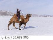 Asie, Mongolie, Ouest de la Mongolie, Montagnes de l'Altai, Village de Kanhman, course de chameaux de Bactriane dans la plaine / Asia, Mongolia, West Mongolia... (2019 год). Редакционное фото, фотограф Morales / age Fotostock / Фотобанк Лори