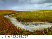 Saltmarsh and tidal channel, St. Peter Ording, Schleswig-Holstein Wadden Sea National Park, Germany, September. Стоковое фото, фотограф Sandra Bartocha / Nature Picture Library / Фотобанк Лори