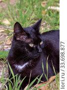 Купить «Portrait of a cat with green eyes close-up», фото № 33698877, снято 8 марта 2020 г. (c) Татьяна Ляпи / Фотобанк Лори