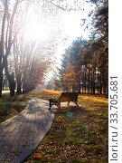 Купить «Bench and fallen leaves.», фото № 33705681, снято 19 ноября 2019 г. (c) Елена Блохина / Фотобанк Лори