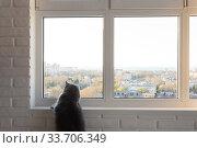 Купить «The big gray cat looks with interest in the window outside», фото № 33706349, снято 11 апреля 2020 г. (c) Иванов Алексей / Фотобанк Лори