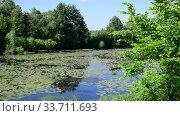 Купить «Beautiful summer landscape with river overgrown with water lily leaves», видеоролик № 33711693, снято 22 июня 2018 г. (c) Володина Ольга / Фотобанк Лори