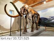 Скелет мамонта на выставке древних ископаемых. Стоковое фото, фотограф Евгений Ткачёв / Фотобанк Лори