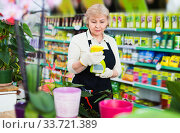 Adult female gardener is standing with substances for care of flowers in greenhouse. Стоковое фото, фотограф Яков Филимонов / Фотобанк Лори