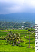 View of rice terraces . Indonesia. Bali. (2016 год). Стоковое фото, фотограф Вознесенская Ольга / Фотобанк Лори