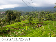 Indonesia. Bali. Cloudy day over the tropical nature and rice terraces (2016 год). Стоковое фото, фотограф Вознесенская Ольга / Фотобанк Лори
