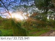Купить «Cuba. Havana. Park for walking and recreation in the city», фото № 33725941, снято 27 января 2013 г. (c) Вознесенская Ольга / Фотобанк Лори