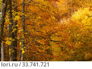 Dense texture of autumn golden branches in the forest. Стоковое фото, фотограф Ирина Мойсеева / Фотобанк Лори