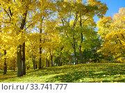 Купить «Осенний пейзаж с кленами в солнечный день», фото № 33741777, снято 12 октября 2018 г. (c) Елена Коромыслова / Фотобанк Лори