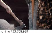Купить «Chopping dry log with an ax in woodpile», видеоролик № 33768989, снято 2 июня 2020 г. (c) Константин Шишкин / Фотобанк Лори