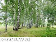 Купить «Летний пейзаж с березовым лесом», фото № 33773393, снято 17 августа 2017 г. (c) Елена Коромыслова / Фотобанк Лори