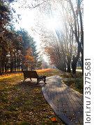 Купить «Fallen leaves on the ground.», фото № 33775681, снято 19 ноября 2019 г. (c) Елена Блохина / Фотобанк Лори