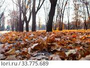 Купить «Fallen leaves on the ground.», фото № 33775689, снято 19 ноября 2019 г. (c) Елена Блохина / Фотобанк Лори