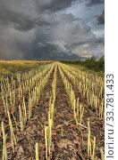 Купить «Stubble Field and Prarie Storm Canola Saskatchewan», фото № 33781433, снято 1 июня 2020 г. (c) age Fotostock / Фотобанк Лори