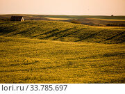 Купить «Prairie Scene Saskatchewan summer crop harvest Canada», фото № 33785697, снято 1 июня 2020 г. (c) age Fotostock / Фотобанк Лори