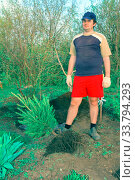 Купить «A young handsome man plants a sapling of spruce in the garden.», фото № 33794293, снято 10 мая 2014 г. (c) Акиньшин Владимир / Фотобанк Лори