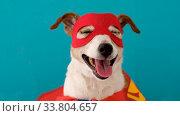 Купить «Funny dog in superhero costume», видеоролик № 33804657, снято 20 мая 2020 г. (c) Ekaterina Demidova / Фотобанк Лори