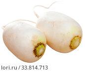 Many white radish. Стоковое фото, фотограф Яков Филимонов / Фотобанк Лори