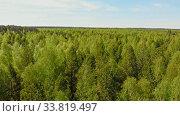 Купить «A huge thicket of coniferous green forest while summer», видеоролик № 33819497, снято 2 июня 2020 г. (c) Константин Шишкин / Фотобанк Лори