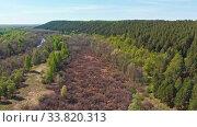 Купить «A huge thicket of coniferous green forest and empty field», видеоролик № 33820313, снято 2 июня 2020 г. (c) Константин Шишкин / Фотобанк Лори