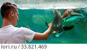 Купить «Junger Mann spielt mit Humboldt-Pinguinen, (Spheniscus humboldti), Zoo, Koeln, Rheinland, Nordrhein-Westfalen, Deutschland, Europa», фото № 33821469, снято 3 июля 2020 г. (c) age Fotostock / Фотобанк Лори