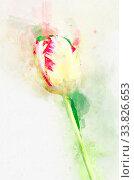 Купить «Flower Yellow tulips in spring in the country. Stylization in watercolor drawing.», фото № 33826653, снято 5 июня 2020 г. (c) easy Fotostock / Фотобанк Лори
