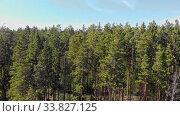 Купить «A view of huge thicket of coniferous green forest», видеоролик № 33827125, снято 1 июня 2020 г. (c) Константин Шишкин / Фотобанк Лори